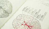 脳の認識回路『アナログ回路』と『デジタル回路』